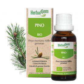 PINO - 15 ml | Herbalgem